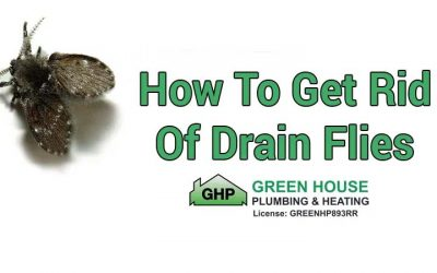 How to Get Rid of Drain Flies?